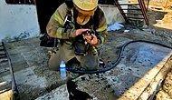 Antalya'da Yangından Anne ve Yavru Kedileri Kurtaran İtfaiye Ekipleri ❤