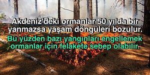 Doğanın Döngüsü İçin Ormanların Belli Aralıklarla Yanması Normal Hatta Mecburi mi?