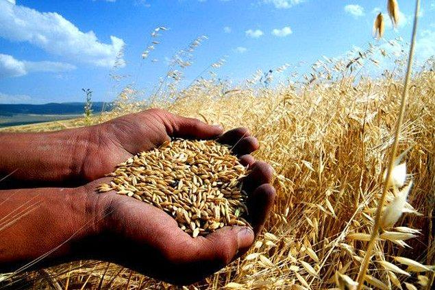 Ülkelere geçmeden önce yaşamın devamlılığı için gereken etmenleri saymakta fayda var. Yaşamın devamlılığında tarıma elverişli arazilere ihtiyaç duyuluyor.