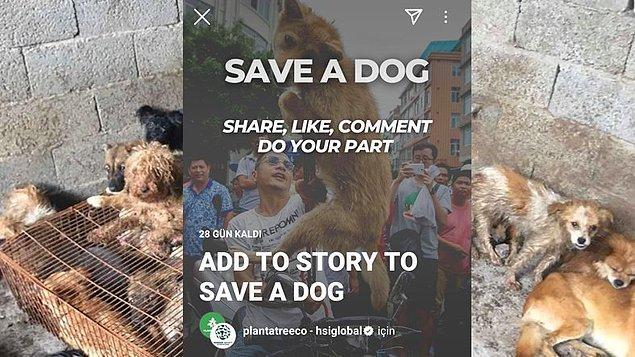 """Bu sayfanın ilk story girişimi bu değil. Yulin Festivali'ne karşı """"Save a Dog"""" (Bir Köpeği Kurtar) hikayesini paylaştırmak için de benzer yöntemler denenmiş."""