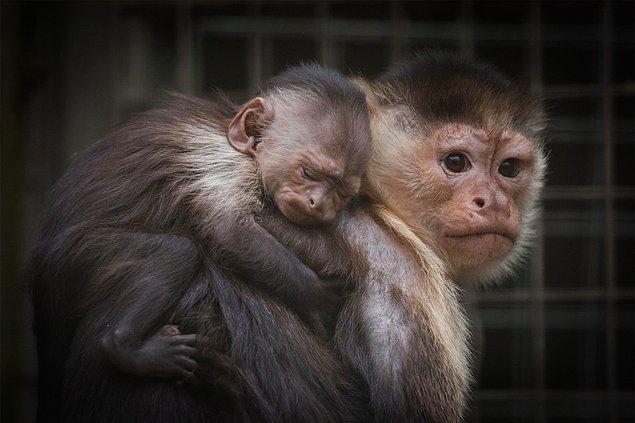Yalnızca kaçak yollarla getirilen hayvanlar değil, anneleri de büyük zarar görüyor.