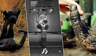 Gülümsemenize Hakim Olamayacağınız 42 Fotoğrafla Hayatın Yürek Isıtan Detayları