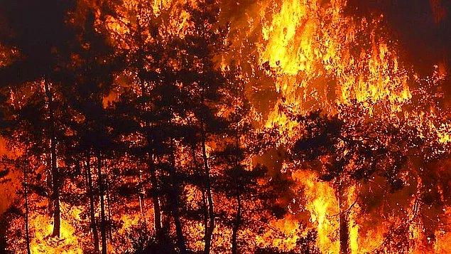 Bildiğiniz üzere ülkece çok zorlu bir dönemden geçiyoruz. Günlerdir kontrol altına bir türlü alınamayan orman yangınları ciğerimizi yakıyor.