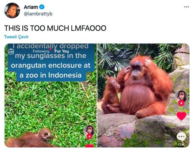 """2. """"Endonezya'da gözlüklerimi yanlışlıkla orangutanların kafesine düşürdüm."""""""
