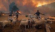 6. Gün: Türkiye'nin Ormanları Yanmaya Devam Ediyor