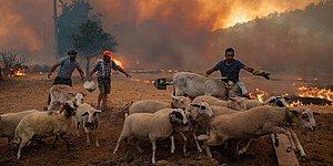 Canlı Blog | Türkiye'nin Ormanları Yanmaya Devam Ediyor