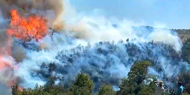 Artık izlediğimiz videolardan yanan ormanlarımızdan bahsederken hissettiğimiz acıyı tarif edemiyoruz.