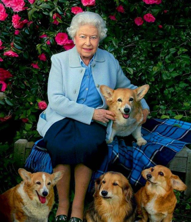 5. Köpeklere duyduğu sevgisiyle bilinen Kraliçe Elizabeth neredeyse 30'dan fazla 'Pembroke Welsh Corgi' cinsi köpeğe baktı. Ancak bazı köpeklerin saray çalışanlarına birkaç kez saldırdığı da biliniyor.