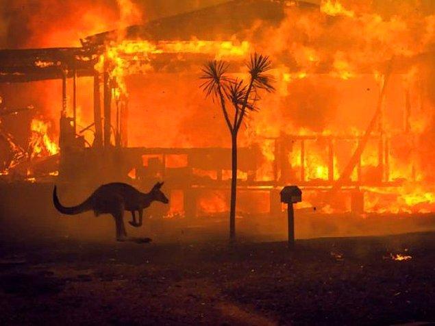 En fazla can kaybı ABD'nin batısında ve Avustralya'da görüldü