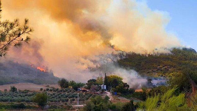"""""""Orman yangınları böcek istilası gibi olumsuzları da artırıyor"""""""