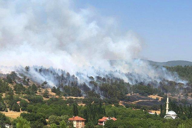 13:30 | Uşak'ta orman yangını çıktı