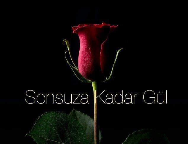 11. Forever Rose