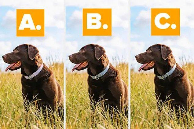 5. Bu görsellerden biri diğer ikisinden farklı. Farklı olan hangisi sence?