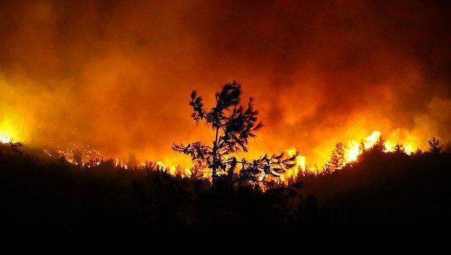 Ülkemizde çıkan orman yangınları o kadar korkutucu bir hal aldı ki... Göz göre göre yanıyoruz, havadan yeterince müdahale edilemediği için kontrol altına alamıyoruz yangınları.