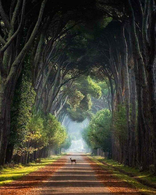 """2. """"İtalya'daki Ulusal Park."""""""