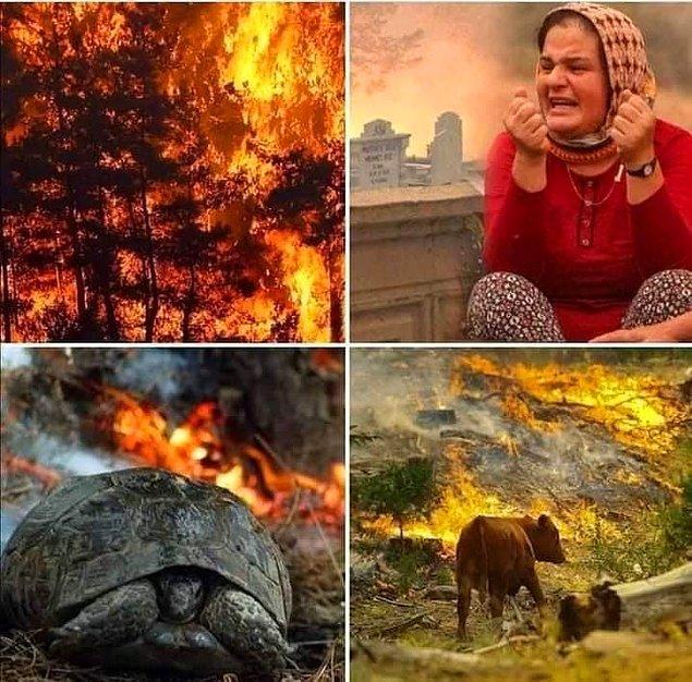 9 gündür ülkemizde dinmeyen yangınlarla verilen mücadele hala devam ediyor. Halk kol kanat gererek kendi imkanlarıyla yangınları söndürmeye çalışıyor. Evleri, ekmek tekneleri yanan ve yangında can veren kardeşlerimizi gördükçe içimiz parçalanıyor. Tabii bir de bunların yanında sosyal medyada ilginç şeyler oluyor.
