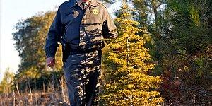 Sayıştay Raporundan: Orman Genel Müdürlüğü Envanter Çıkarmamış