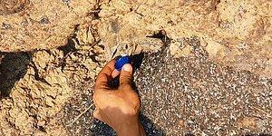 Manavgat'taki Orman Yangınında Kaplumbağanın Mucize Kurtuluşu