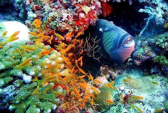 1. Tetik balığı