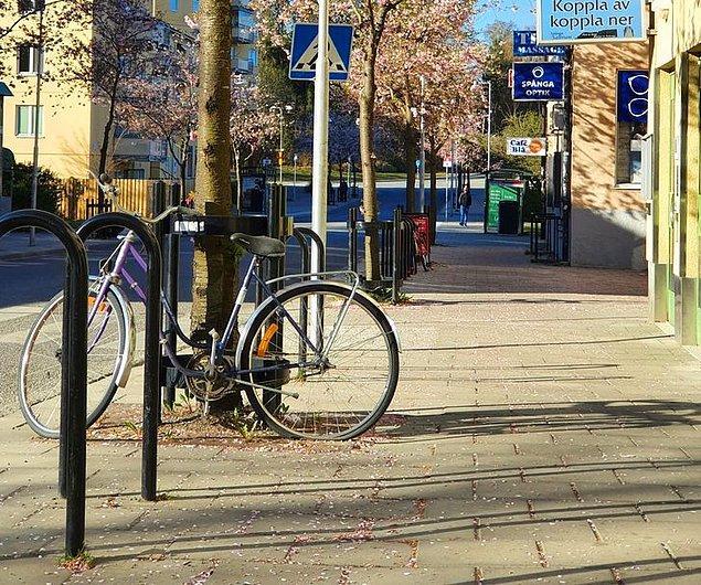 3. İsveç'teki terk edilmiş bisikletler ilginç bir yöntemle yeniden kullanılıyor.