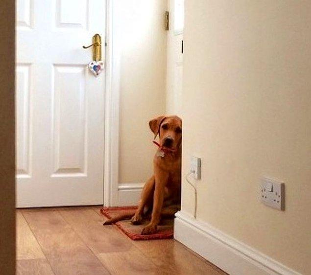 """13. """"Hemen hemen her evcil hayvanın sigortası ve kaydı vardır. Ayrıca, köpekler ağızlık takmaz."""""""