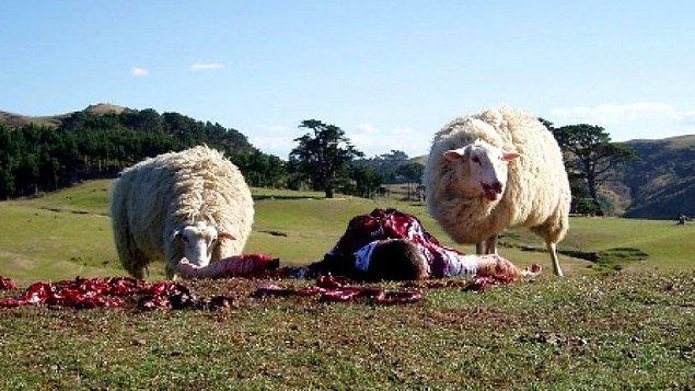 198. Black Sheep (2006)