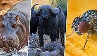 Asla Karşı Karşıya Kalmak İstemeyeceğiniz Dünyanın En Tehlikeli Hayvanları