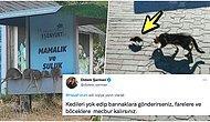 Simülasyondan Kaçış Yok! Yaşadığımız Onca Felaketten Sonra Şimdi de İstanbul Sokaklarını Fareler Bastı