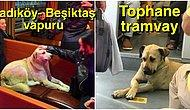 Kendi Kendine Metrodan İnip Vapura Binerek Emekli Dedeler Gibi Gezen İstanbullu Köpüşe Aşık Olacaksınız