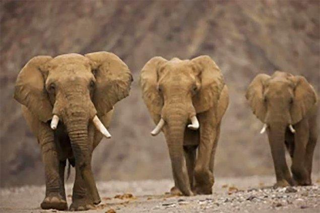 5. Fillerin vücudunda tümörlerle savaşan önemli bir genden 20 tane bulunur bu nedenle kanser olmaları çok zordur. İnsanlarda ise bu genden sadece 1 tane vardır.