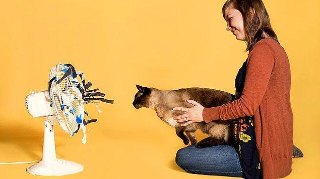 13. Kediler birçok zeka testinde köpeklerle rekabet edebilecek seviyededir ancak bilim insanları kedilerde deney yapacak ve onları inceleyecek sabra sahip değildir.