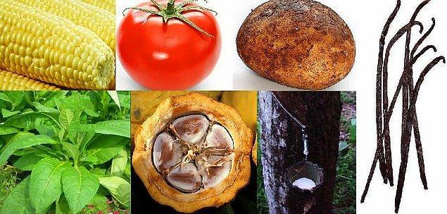24. 1500 yılına kadar eski dünyada domates, patates, yaban mersini, yer fıstığı, mısır, fasulye, çikolata, vanilya veya tütün yoktu, çünkü bunlar Amerika'ya özgüydü. Bu, diğer birçok bitki, hayvan, mantar ve hastalığı da içeren Kolomb Değişimi'nin bir parçasıydı.