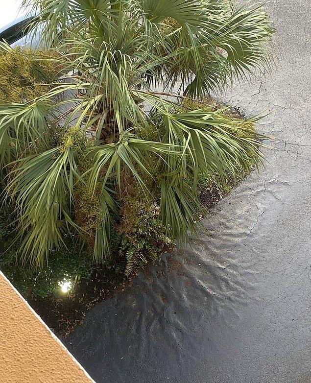 """11. """"Bir park yerinde ağacın kökleri betonun altından belli oluyor."""""""
