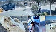 Ocakta Su Isıtıp Uyuyan Köpeğin Üzerine Kaynar Su Döken Özel Güvenlik Görevlisi