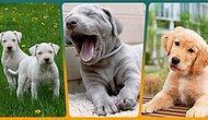 Köpek Sahibiyseniz Mutlaka Edinmeniz Gereken 15 Ürün