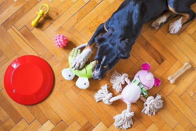 14. Köpeklerin ses çıkaran oyuncakları sevmesinin nedeni, oyuncaktan çıkan sesin onlara küçük bir hayvanın ölmesini hatırlatmasıdır.