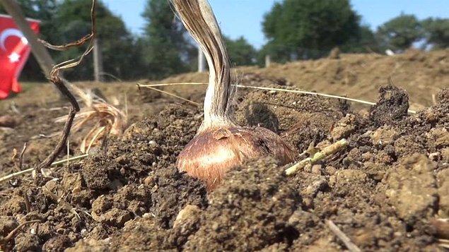 """""""Geleneksel yöntemlerle yapılan tarımın çok verimli olmadığını gördük. Teknolojiyi kullanarak tarım yapmak istedik."""""""