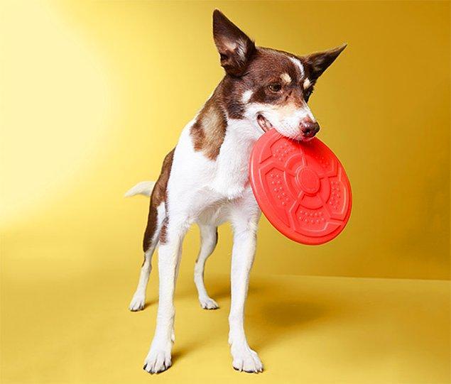 1. Koşmaya meraklı olmayan köpek var mı?