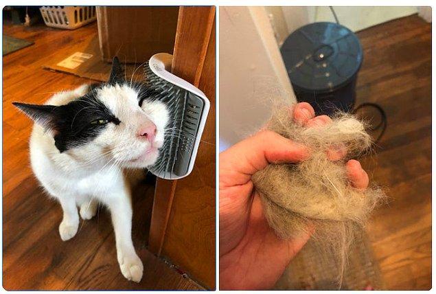 3. Monte edilebilen fırça ile kedinizin size aşkla bakmasını sağlayın!