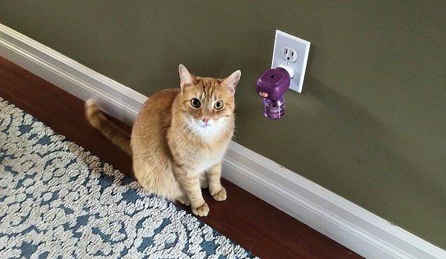 8. Stres difüzörleri kedi ve köpeklerde stres, korku ve heyecan sırasında istenmeyen davranışları düzeltmek için tasarlanmıştır.