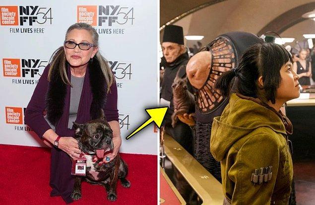 17. Star Wars serisinin 2017'de çıkan filmi 'The Last Jedi'da Prenses Leia'yı canlandıran oyuncu Carrie Fisher'ın köpeği bir sahnede yer almış.