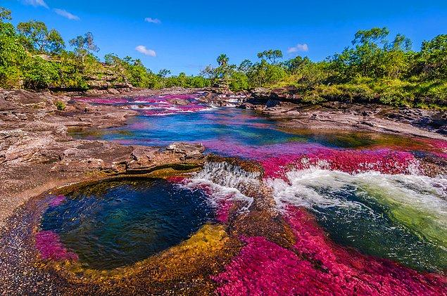 5. İçine atlayıp yüzmemek için kendiniz zor tutacağınız Cano Cristales Nehrinin ağızları açık bırakan manzarası!