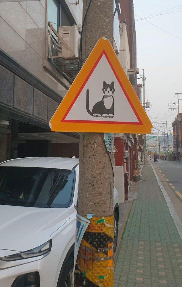"""1. Bu bir """"kedi yaya geçidi"""" tabelası değil. Bu tabela, sizi her an bir kedi çıkabileceğine dair uyarmak için."""