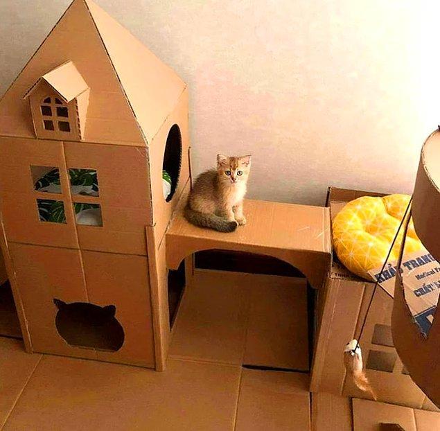 """9. """"Kedim için kartondan minik bir şato hazırladım!"""""""