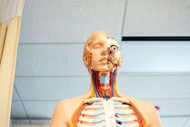 12. İnsan vücuduna bir ticari eşya olarak fiyat biçmek mümkündür.
