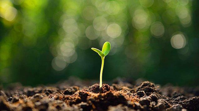6. Hindistan'da bir şirket sigaranın neden olduğu çevresel zararları azaltmak için sigara filtrelerine tohum gömme uygulamasını başlattılar.