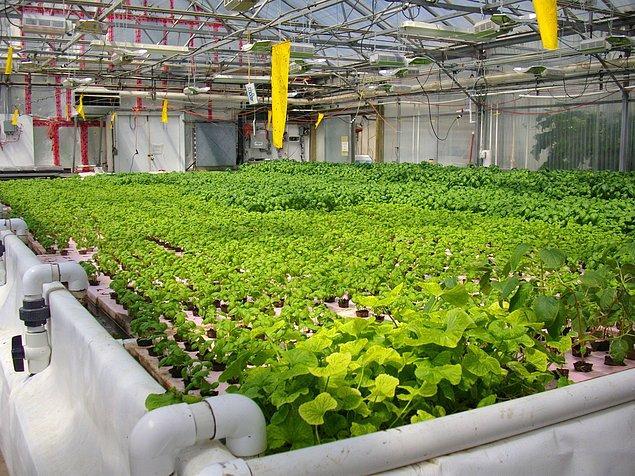 Akuaponik sistemler geleneksel tarıma göre daha avantajlı mıdır?