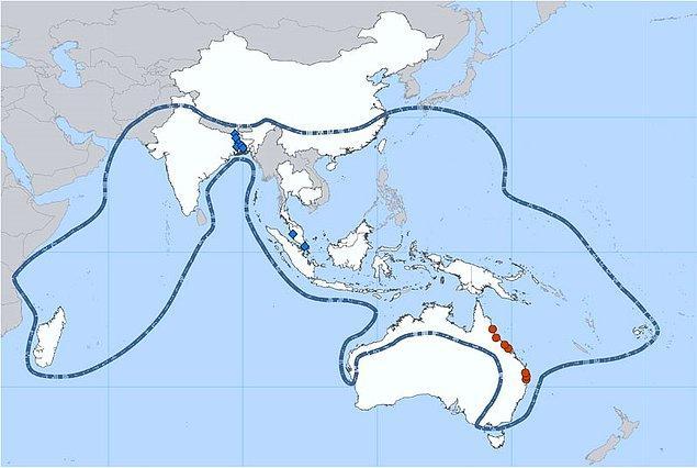 Nipah virüsü ilk olarak 1999 yılında Malezya'da domuz çiftliklerinde meydana gelen bir salgın sırasında tespit edildi.