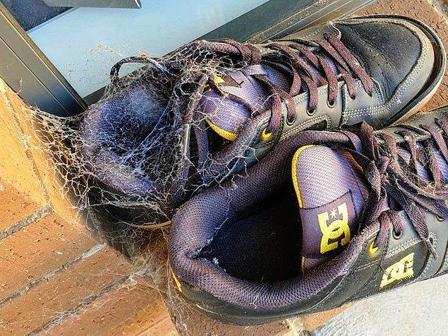 6. Ancak canlı çeşitliliğinden dolayı birkaç saatliğine dışarıda bıraktığınız ayakkabılarınızı bu şekilde bulabilirsiniz!