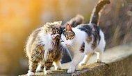 Bilim İnsanları, Kedilerin Karakterlerindeki 7 Ortak Özelliği Belirledi